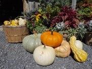 ottawa-fall-garden-centre_20180909_113142