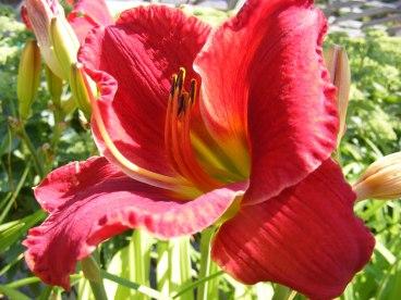 ottawa-fall-perennial-plants-carp-garden-centre_DSCF1692