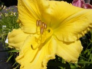 ottawa-fall-perennial-plants-carp-garden-centre_DSCF1693