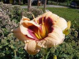 ottawa-fall-perennial-plants-carp-garden-centre_DSCF1695