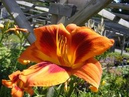 ottawa-fall-perennial-plants-carp-garden-centre_DSCF1698