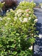 ottawa-fall-perennial-plants-carp-garden-centre_DSCF1710 (2)
