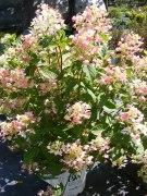ottawa-fall-perennial-plants-carp-garden-centre_DSCF1714 (2)