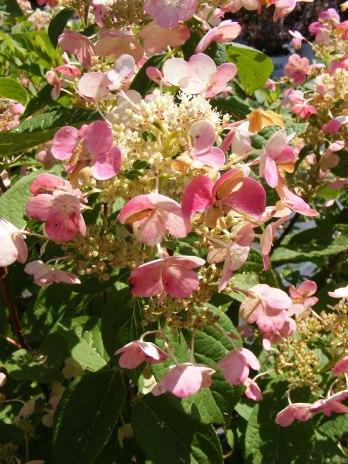 ottawa-fall-perennial-plants-carp-garden-centre_DSCF1715 (2)