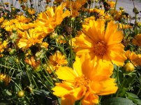 ottawa-fall-perennial-plants-carp-garden-centre_DSCF1716