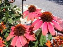 ottawa-fall-perennial-plants-carp-garden-centre_DSCF1719