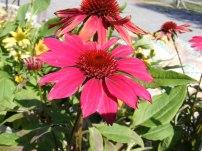 ottawa-fall-perennial-plants-carp-garden-centre_DSCF1720