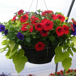 Order online for all of your gardening needs