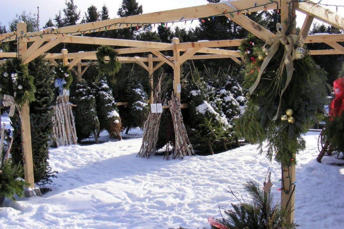 Christmas at the Carp Garden Centre